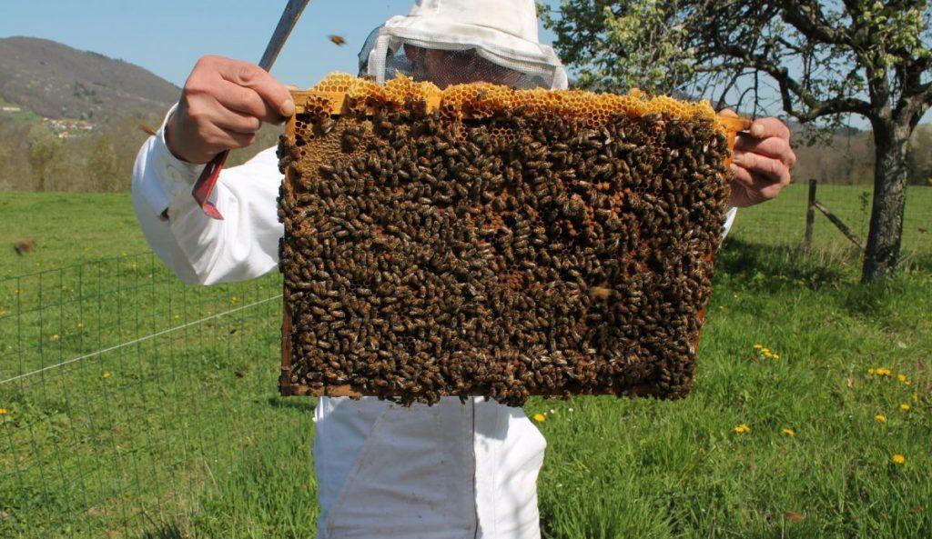 cadre d'abeille-ruche