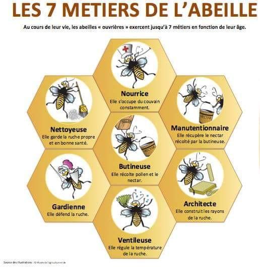 les métiers d'une ouvrière-abeille